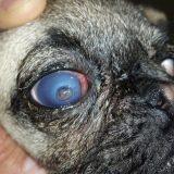 مراقبت از چشمها